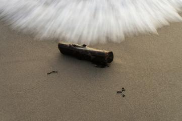 Treibholz in der Brandung