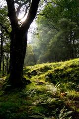 Wicklow Mountains Nationalpark