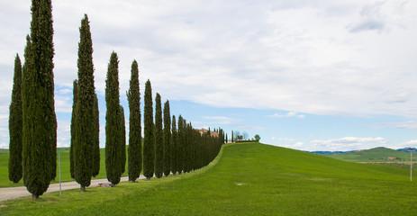 Val D'orcia - Cipressi