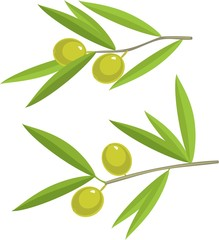 Green olives on branches