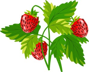 Strawberry plant with red berries
