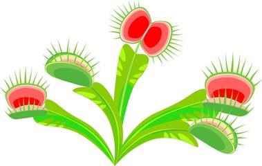 Venus flytrap (Dionaea muscipula) plant
