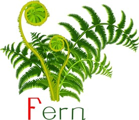 Green fern with title