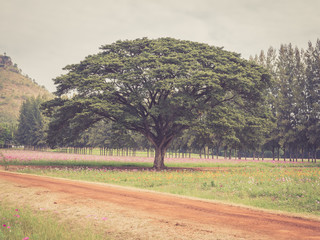 Alone tree in a flowered field with vintage filtered effect