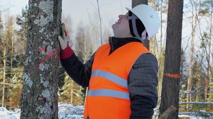 Lumberjack in the forest near tree in winter