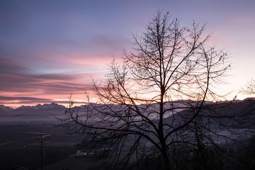 albero al tramonto 3