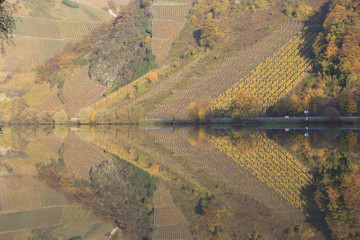 reflection of vineyard in river