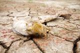 dead fish drought lake  heat