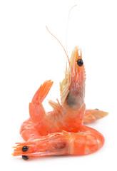 some shrimps