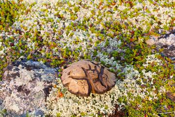 magic symbol Scandinavian special mushroom