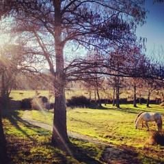 campo con caballos