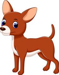 Cute chihuahua dog cartoon