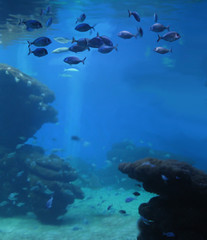 Aquarium with school of fish