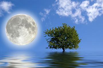 Luna ed albero