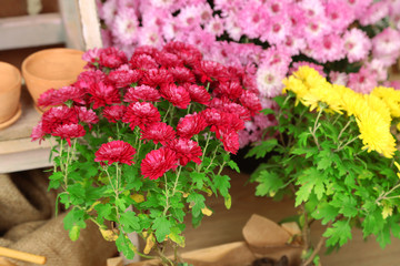 Flowers in pot, close-up. Planting flowers concept