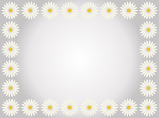 A flower frame with white daisies in gray background