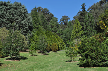 Green trees at the park