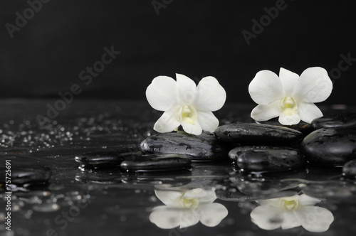 Poster Spa Two white orchid on wet stones –reflection