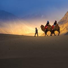 Camel safari in Nubra Valley, Ladakh, India