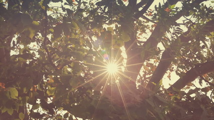 Branches in wind with glitter Sun flare