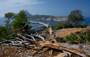 Dragonera view with gnarled wood trunk. Mallorca, Spain.