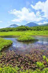 Water lily of swamp, Tashirotai marsh, Hakkoda, Aomori