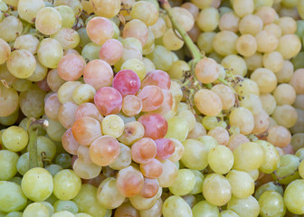 Fresh grapes. Majorca, Spain.