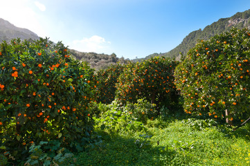 Orange valley, Mallorca, Balearic islands, Spain