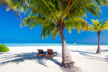Deck chairs under umrellas and palm trees on a beach