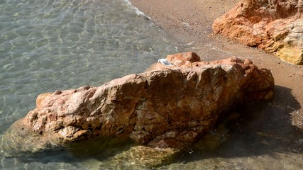 Clear Sea Cliffs And Seagull