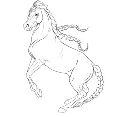 The coloring of the horse