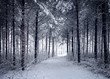 Snowy Road through the cold wintry forest