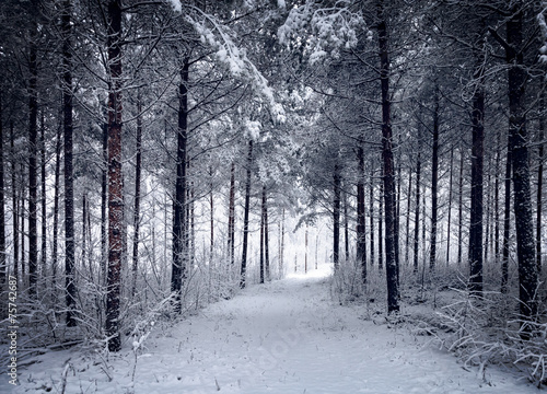 AluDibond Wald Snowy Road through the cold wintry forest