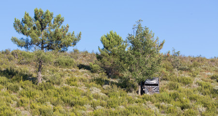 hidden black hut for big game hunting, wooden made