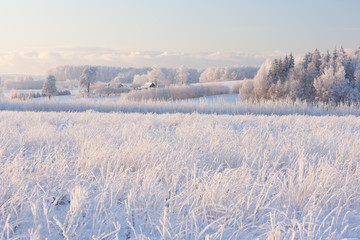 Rural winter landscape with white frost on field and forest