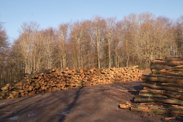 Recently felled timber