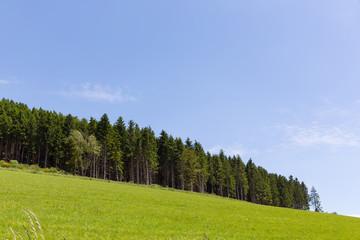 Forstwirtschaft in Schmallenberg, Sauerland, Deutschland