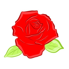 red rose isolated illustration