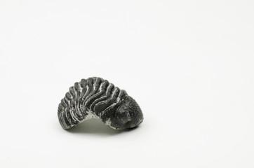 Trilobit aus Marokko (seitlich)
