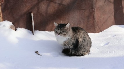 fluffy cat winter walks on nature