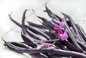 haricot violet sur bois blanc