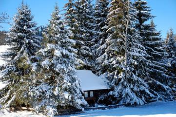 Haus zwischen Tannen im Winter