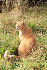 Ginger cats playing on meadow. Sunny summer day
