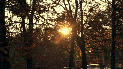 Sun flare through trees in park during autumn