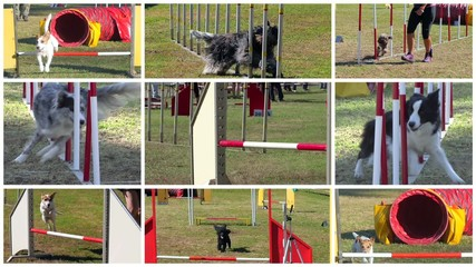 dog agility race montage