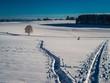 canvas print picture - Winterspaziergang hinterlässt Spuren im Schnee