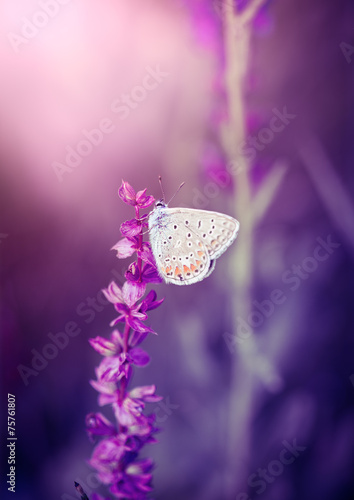 Keuken foto achterwand Vlinder Butterfly on the wild flower