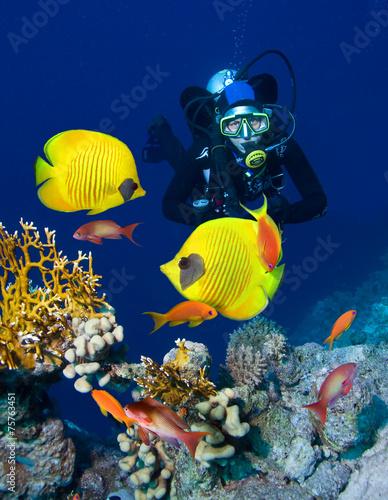 obraz lub plakat Kobieta nurek zwiedzania ogrodu koralowego
