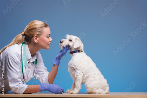 Cute little dog visits vet - 75764402