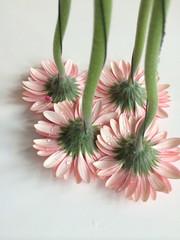 Upside down pink daisies